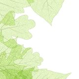 Tenplate för bladskeletthöst 10 eps Arkivfoto