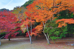 Tenryuji Sogenchi Garden a UNESCO World Heritage Site in Kyoto Royalty Free Stock Images