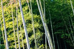 Tenryuji temple bamboo forest in Kyoto, Japan. Tenryuji temple, bamboo forest in Kyoto, Japan Stock Photos