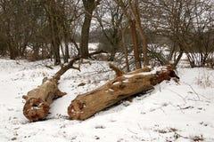 Tensões na estrada após a queda de neve fotos de stock royalty free