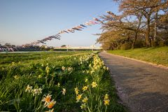 Beautiful walkway along Kitakami River at Tenshochi Park,Kitakami,Iwate,Tohoku,Japan. Tenshochi is located by the serene Kitakami River. It's famous for being royalty free stock images
