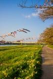 Beautiful walkway along Kitakami River at Tenshochi Park,Kitakami,Iwate,Tohoku,Japan. Tenshochi is located by the serene Kitakami River. It's famous for being stock photos
