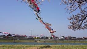 Tenshochi Park along the Kitakami River in springtime sunny day morning