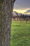 Tensión del ciruelo con paisaje de la puesta del sol Imagen de archivo libre de regalías