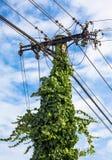 Tensione elettrica dell'albero Fotografia Stock