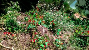 Tensiones coloridas de la mala hierba para aclarar su día foto de archivo libre de regalías