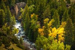 Tensleep Creek Wyoming Fall Colors Royalty Free Stock Photo