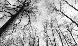 Tentáculos da árvore Imagens de Stock Royalty Free