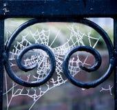 Tentáculos da geada na porta Fotos de Stock