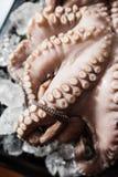 Tentáculos del pulpo Fotos de archivo libres de regalías