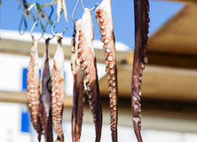 Tentáculos do polvo que secam no sol Fotografia de Stock Royalty Free