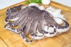 Tentáculos frescos do calamar Fotografia de Stock Royalty Free