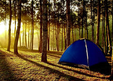 Tent Stock Images