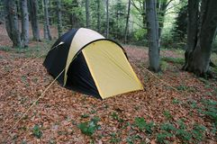 Tent. In the forest Stock Image