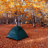 Tent in the autumn forest Stock Photos