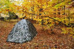 Tent in the autumn forest Royalty Free Stock Image