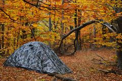 Tent in the autumn forest. Camouflaged tent in the autumn forest early in the morning Stock Images