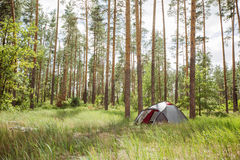 A tent in a beautiful forest Royalty Free Stock Images
