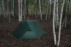 Tent in the birch forest. Royalty Free Stock Photos