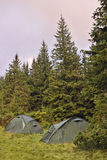 Tent camp. In the downy fir forest Royalty Free Stock Images