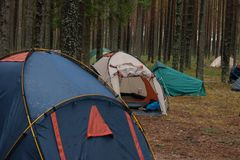 Tent camp in the forest. Near lake Seliger, Russia Royalty Free Stock Photos