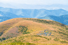 Tent camp on a mountain hill Royalty Free Stock Photography