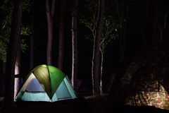 Tent camp in a pine forest Stock Image