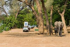 Tent camp in the Savannah at the lake of Zimbabwe, South Africa royalty free stock images