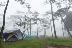 Tent camp. Tent of tourist in park Royalty Free Stock Images