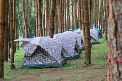 Tent Camping. In a campground in Garden Royalty Free Stock Photography
