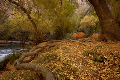 Tent Camping. Two tents in autumn set among cottonwood trees next to stream Royalty Free Stock Photos
