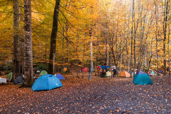 Tent Camping in Bolu. BOLU, TURKEY - NOVEMBER 06, 2016: People camping in forest with fallen leaves, autumn season in Yedigoller. Yedigoller, also known seven stock photos
