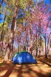 Tent camping Royalty Free Stock Photo