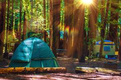 Tent Camping in Redwoods Stock Photo