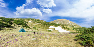 Tent among crocuses on background of mountain range and sky Stock Images