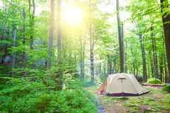Tent in the deciduous forest. Stock Images