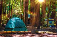 Tent die in Californische sequoia's kamperen stock foto