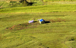 Tent in the farm field Stock Photography