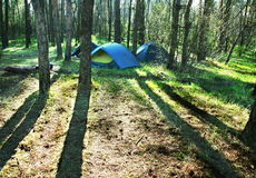 Tent in forest Stock Photography