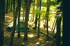 Tent in forest royalty free stock image
