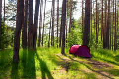 Tent in a forest Stock Photo
