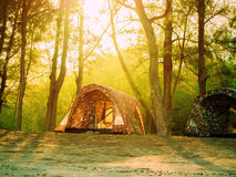 Tent in forest trekking camp Royalty Free Stock Photo