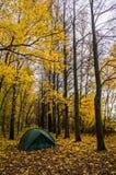 Tent in het de herfstbos Stock Fotografie