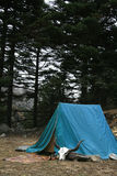 Tent  in the Himalayas Stock Image