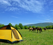 Tent and horses Royalty Free Stock Images