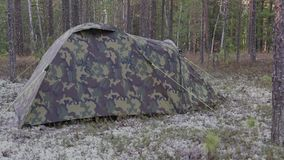 Tent installed in the taiga. A modern tent set in a Siberian pine forest stock footage