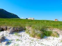 Tent op aard, Lofoten Noorwegen royalty-vrije stock afbeelding