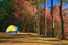 Tent, outdoor life thailand Royalty Free Stock Photos