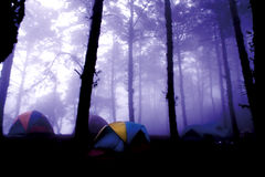 Tent in Pine Forest and Foggy Stock Images