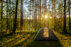 Tent in a pine forest Royalty Free Stock Images